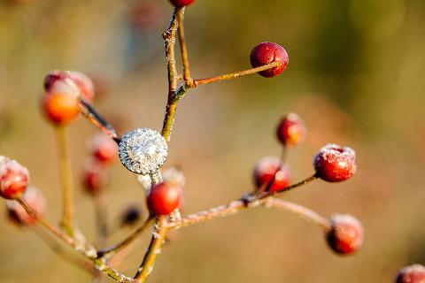 48 Fields Engagement Photos in Leesburg VA | Rustic, Winter, Fields