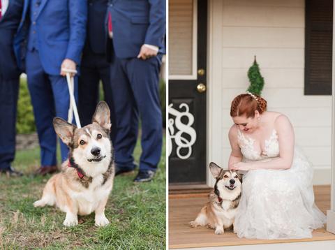 wedding corgi - 48 Fields Wedding Barn | Leesburg VA