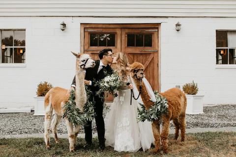 alpacas fun wedding idea - 48 Fields Wedding Barn | Northern VA